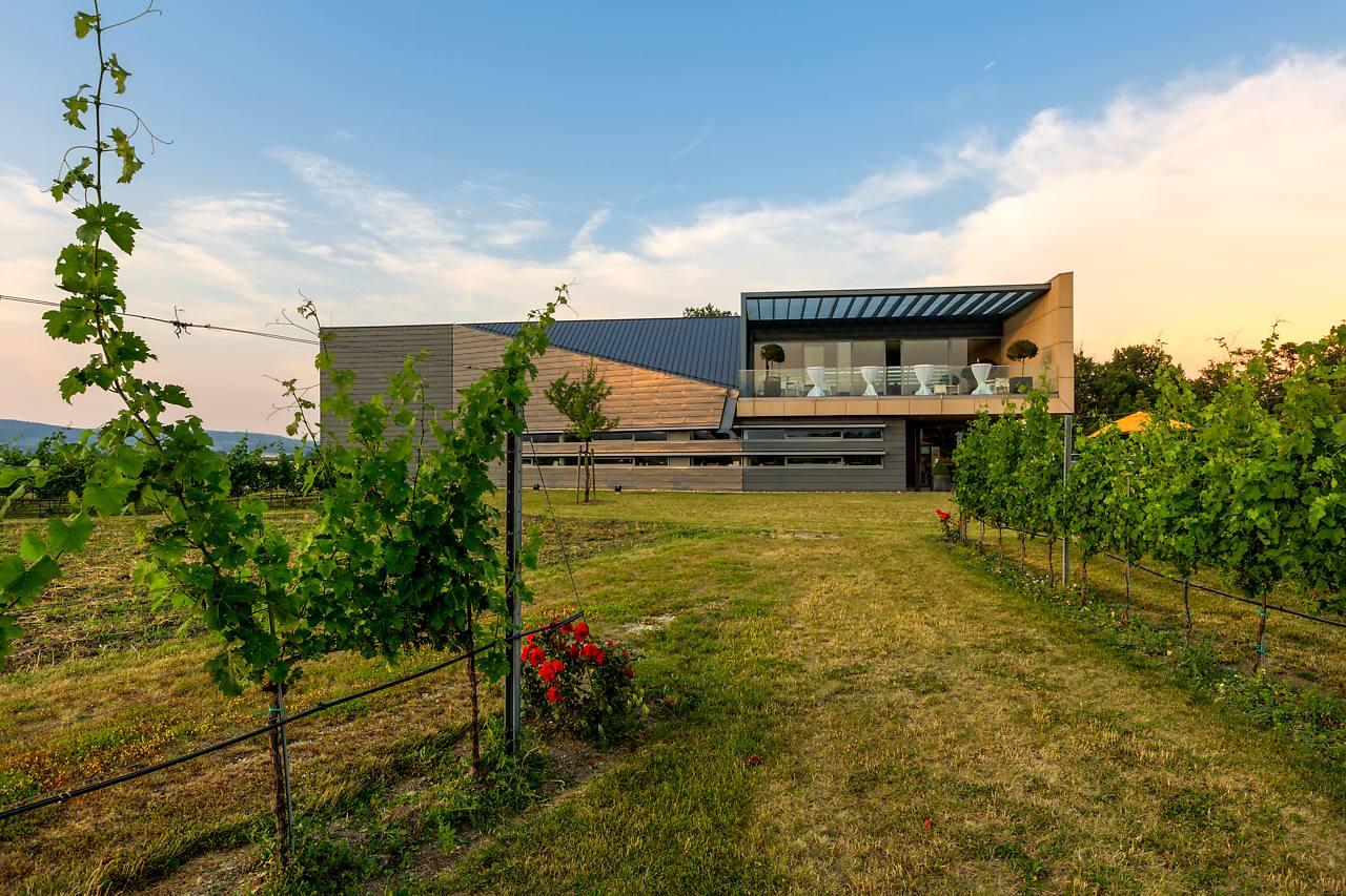 Esterházy: Leithabergs eigenständiger Charakter ist Kern des Weinguts